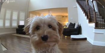 Puppy Gives Owner Virtual Kisses