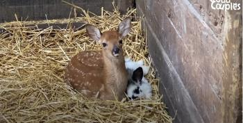 A Real Life Bambi And Thumper