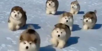 Snow Floofballs!