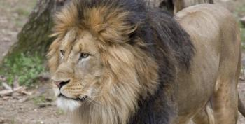 COVID Outbreak Hits Big Cats At National Zoo In Washington