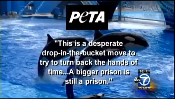 Hurt By 'Blackfish' Documentary, SeaWorld Announces Changes To ...