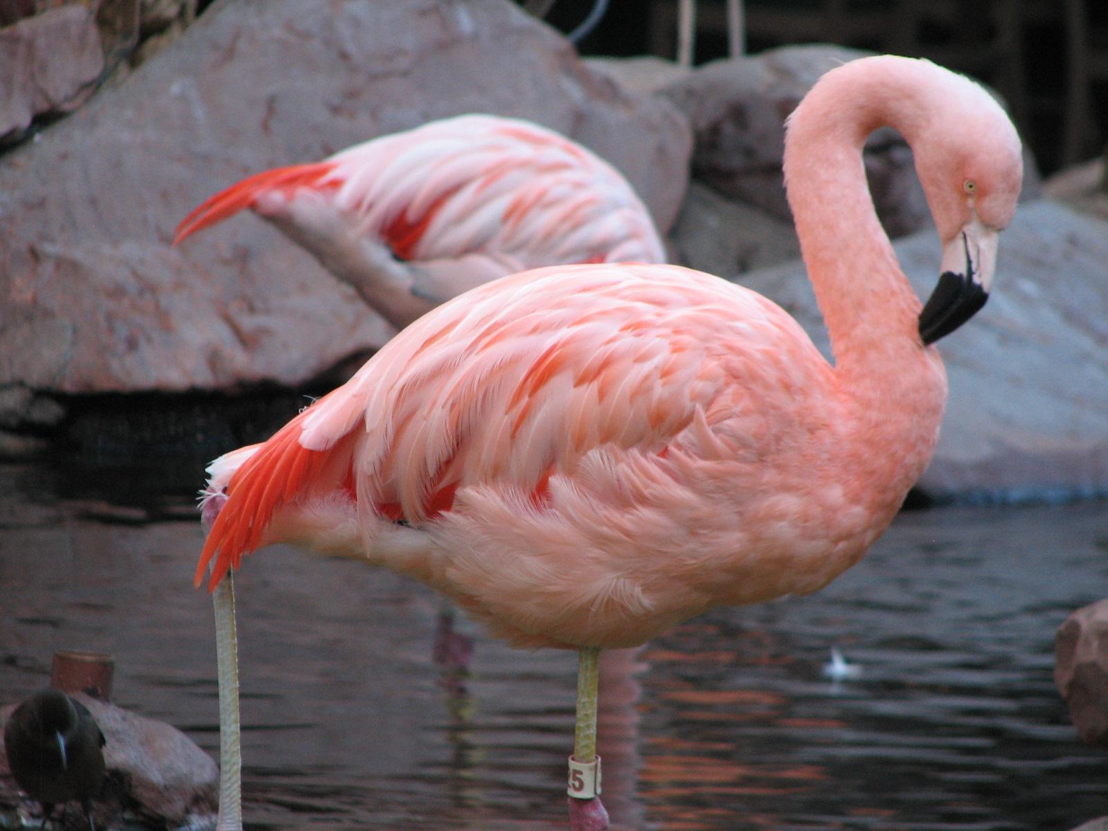 фламинго из красной книги россии фото знали, что луговые