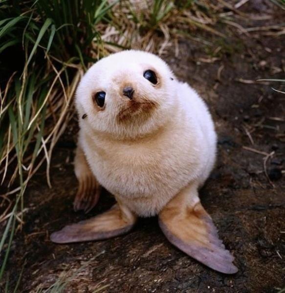 baby_seal.jpg