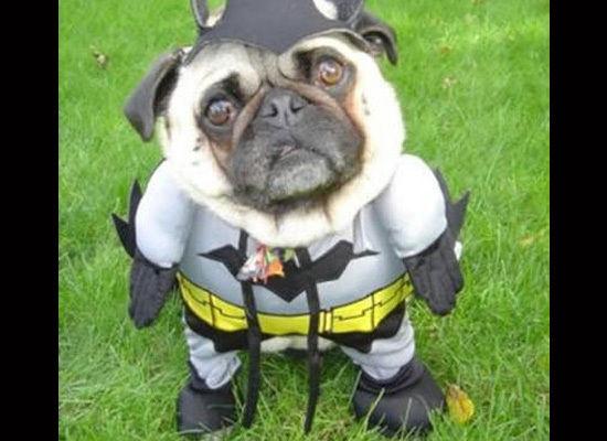 bat_pug.jpg