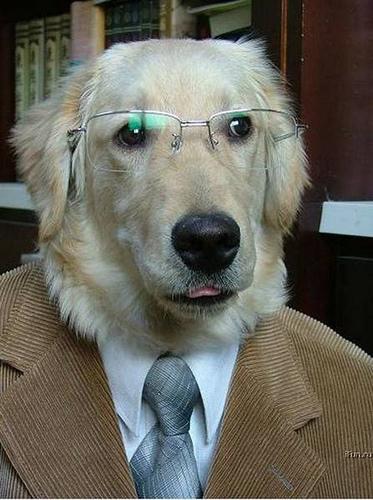 dog_professor.jpg