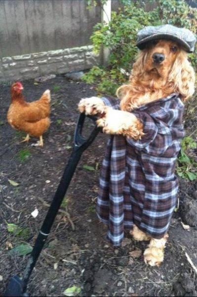 gardening_dog.jpg