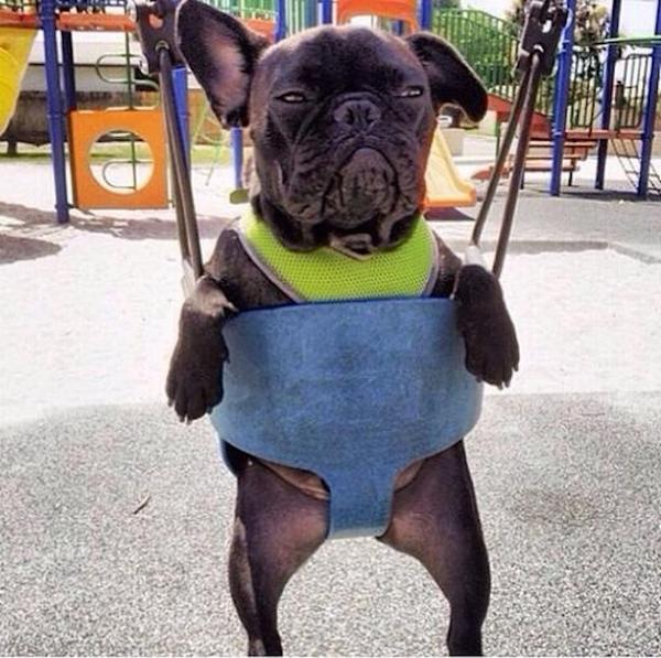 swinging_dog.jpg