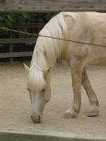Coulter_Horse.jpg