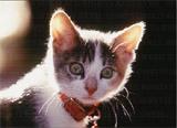 Cat1_316fa.jpg