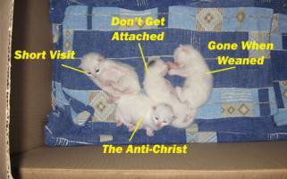 pastor dan's kittens_3b68a_0.jpg