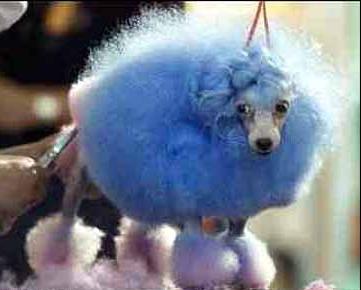 blue_dog_0beee.jpg