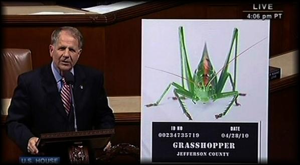 grasshopper_9b1cc.jpg