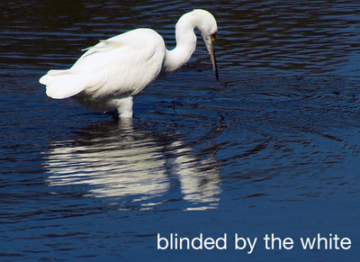 blinded-by-the-white_2e077.jpg