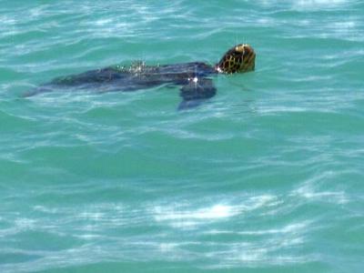 turtle_e0c43.jpg
